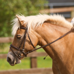 Horse Class Horse Riding Image
